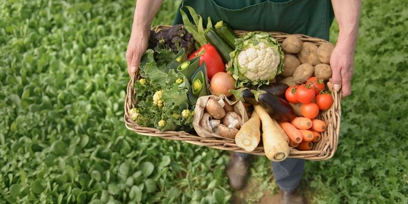 Україна посіла перше місце в Європі за обсягами експорту органічної продукції