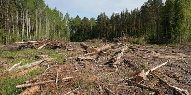 На Волині фермер-волонтер на власному літаку патрулює місцеві ліси (відео)