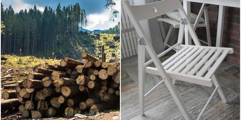 IKEA відповіла на звинувачення у використанні незаконної деревини з України: перевірять постачальників
