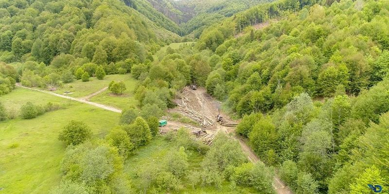 ВВС показали фото незаконних вирубок Карпат
