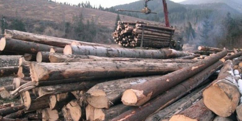 На Прикарпатті посадовці лісгоспу розікрали деревини на майже 2 млн грн — ДБР
