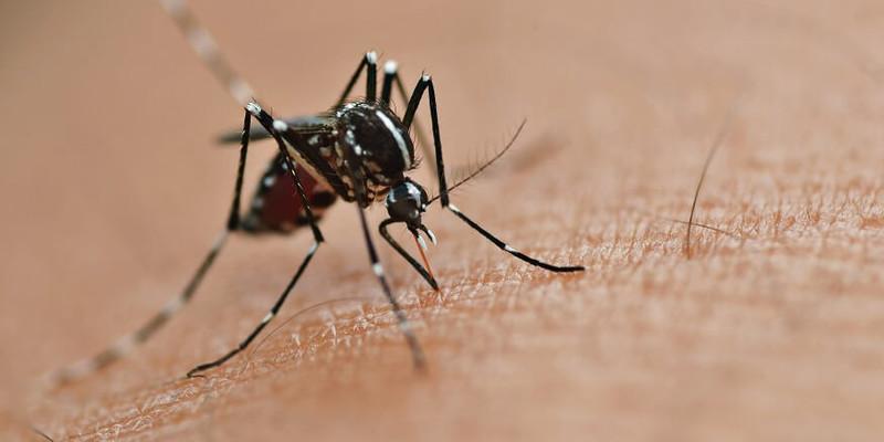 Свербіж та набряк: Уляна Супрун порадила, що робити після укусів комах