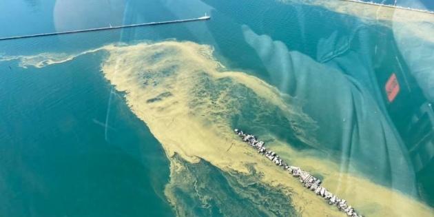 Море біля Одеси «зацвіло» - купатися не радять