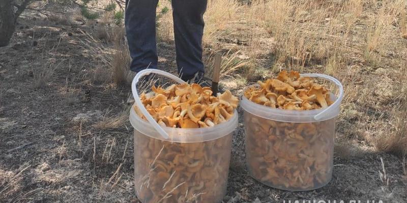 З Чорнобиля на ринки України везли 300 кілограмів небезпечних ягід