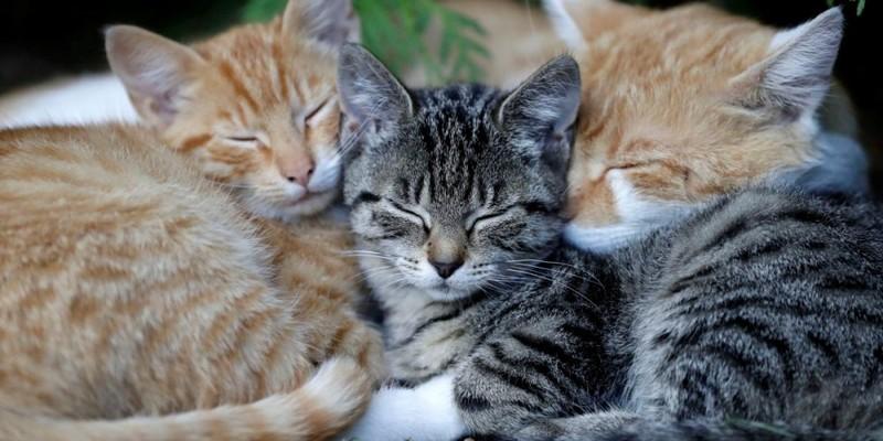 У Львові встановили перші котівнички для безпритульних котів