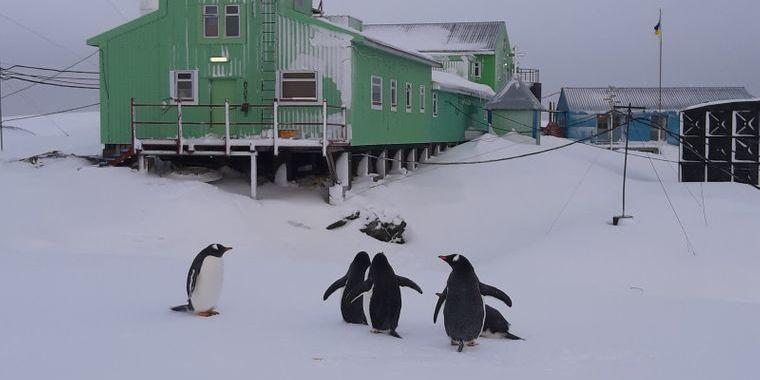 На станцію «Академік Вернадський» несподівано завітали пінгвіни