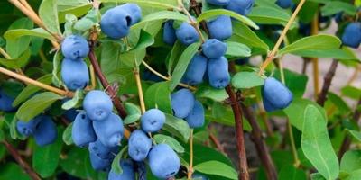В Україні назвали нову прибуткову нішу у садівництві