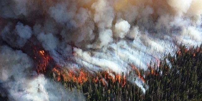 Дим від пожеж може переносити інфекційні та грибкові захворювання — дослідження