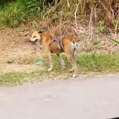 Мавпеня, яке верхи їздить на собаці, порвало мережу (ВІДЕО)