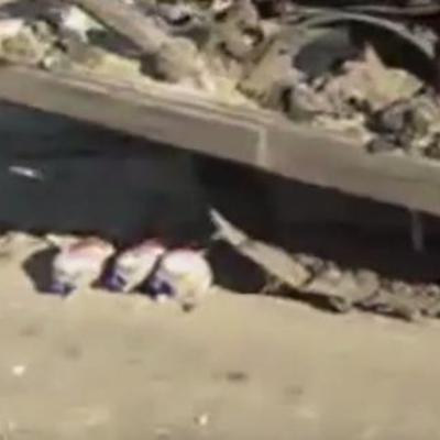 У РФ десять людей весь день знищували трьох санкційних гусей з Угорщини (ВІДЕО)