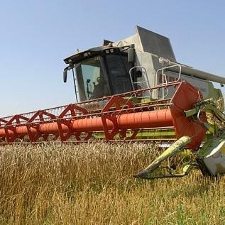 На окупованих територіях активно збирають врожай