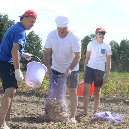 Лукашенко з сином Колею за годину накопали 70 мішків картоплі (фото)