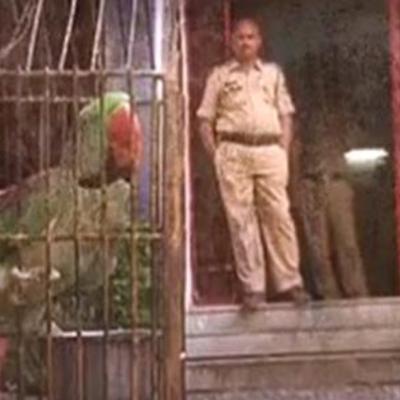 В Індії за образу літньої жінки затримали папугу