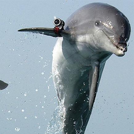 Ізраїль використовує військових дельфінів для стеження за Палестиною