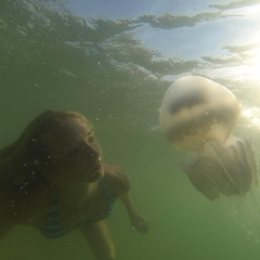 На одеських пляжах навала медуз (фото)