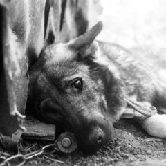 У Києві в трубі теплотраси закопали живцем трьох собак