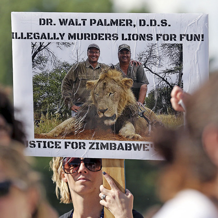 В США протестами зустрічають вбивцю лева Сесіла