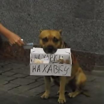 Мережу підкорив київський пес, який збирає гроші в переході (відео)