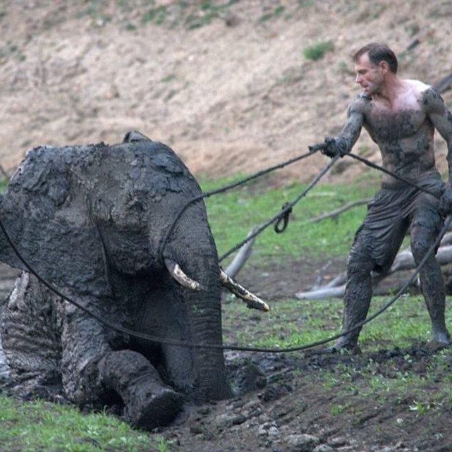 У Зімбабве, незважаючи на всі зусилля, операція з порятунку слоненяти закінчилася сумно (фото)