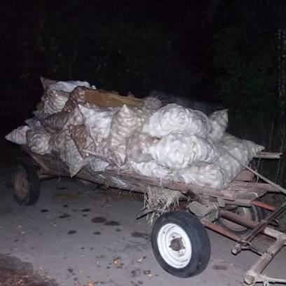 На Київщині затримані місцеві мешканці, які незаконно вивозили яблука із зони відчуження ЧАЕС