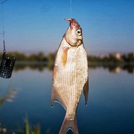 За риболовлю в Україні доведеться платити