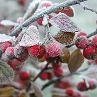В Україні розпочинаються перші заморозки