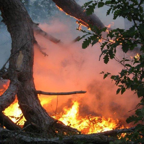 На Одещині підпалили заповідники