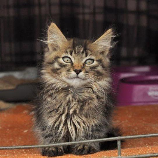 Сьогодні у Києві проведуть кото-ярмарок