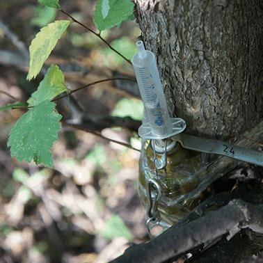 На Луганщині у лісосмузі підірвався український військовий