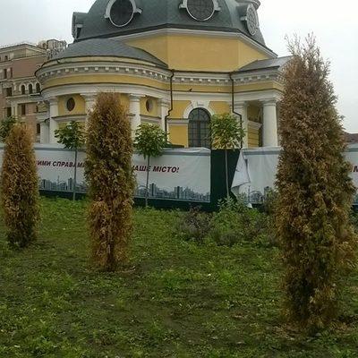 На Поштовій площі Києва засохли всі недавно посаджені дерева (ФОТО)