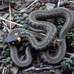 У Бразилії півторарічний малюк загриз отруйну змію