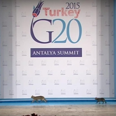 На саміт G20 пробралися коти (відео)