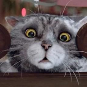 Мережу підкорив різдвяний ролик про кота, якому не щастить (відео)