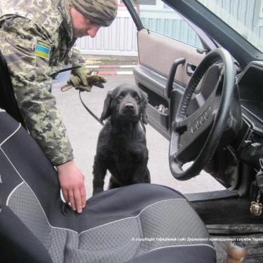 Українець приховав зброю від прикордонників у різних частинах автомобіля