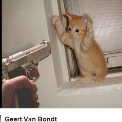 Як брюссельці поліції допомагали, постячи котиків (ФОТО)