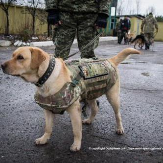 Відтепер на Луганщині прикордонні собаки несуть службу у бронежилетах (відео)