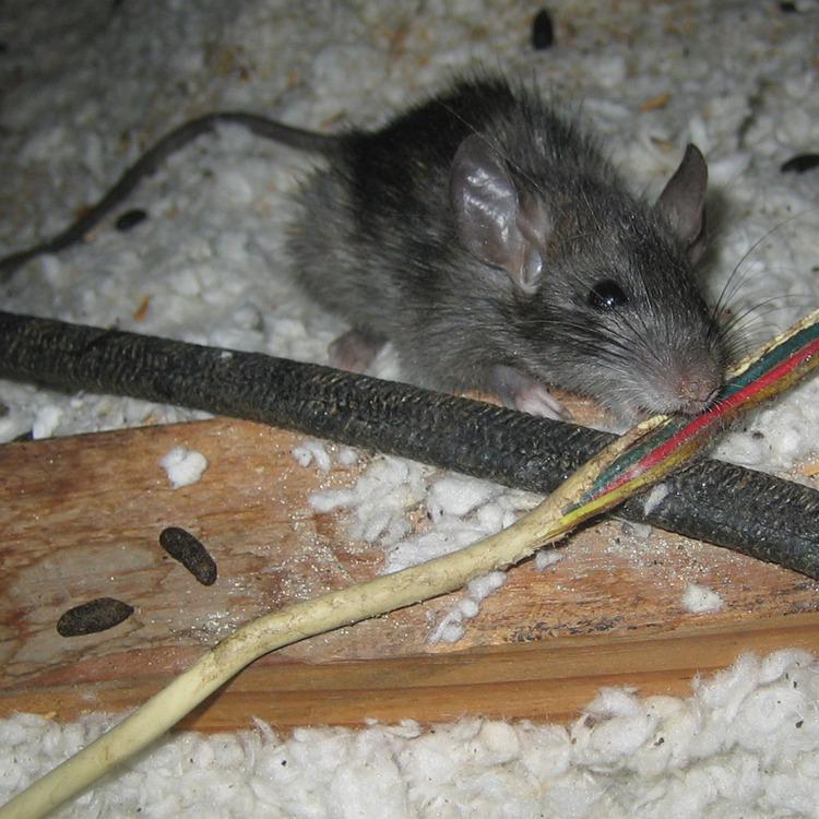 На Сумщині миша відключила світло в 10 населених пунктах
