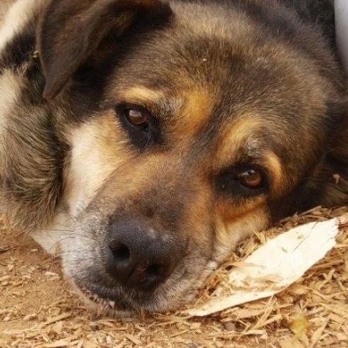 У Києві затримали чоловіка, який труїв собак