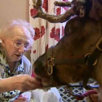 У Лондоні олень привітав з Різдвом мешканців будинку для літніх (відео)