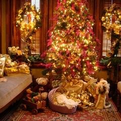 Бути добру: найзворушливіші різдвяні ролики