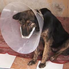 В Росії діти заради забави підірвали петарду в пащі бездомної собаки (фото)