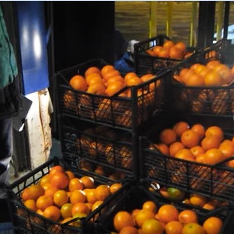 В Росії бульдозером розчавили 225 кг турецьких мандаринів