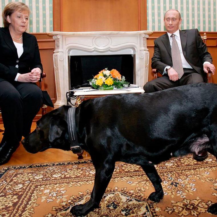 Путін розповів, що йому довелося вибачатися перед Меркель через собаку