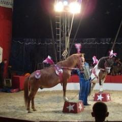 Чотири польських міста відмовилися приймати цирки із дресированими тваринами