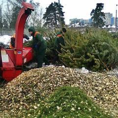 У Києві організовано пункти прийому новорічних ялинок