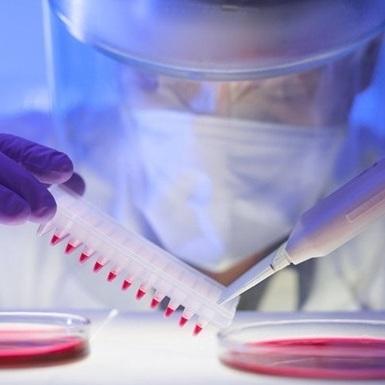 ВООЗ провела екстрене засідання через поширення вірусу Зікка