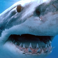 Самка акули з'їла самця на очах у відвідувачів океанаріуму (відео)