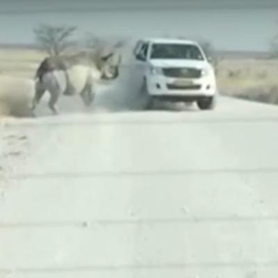 Носоріг з розгону протаранив джип з туристами (ВІДЕО)