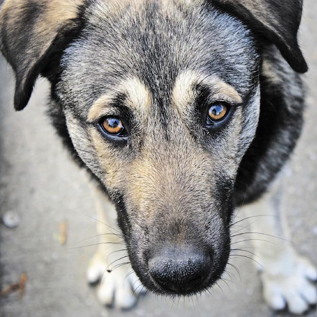 В Ужгороді чоловік відрізав собаці голову та ходив із нею по місту