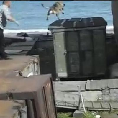 Росіяни заради забави віддали собаку на з'їдення ведмедю (ВІДЕО)